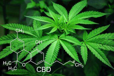 Hay muchas razones para dejar la marihuana. A pesar de que tiene usos medicinales debido a la principal sustancia de su composición, el cannabis es adictivo y puede crear trastornos.